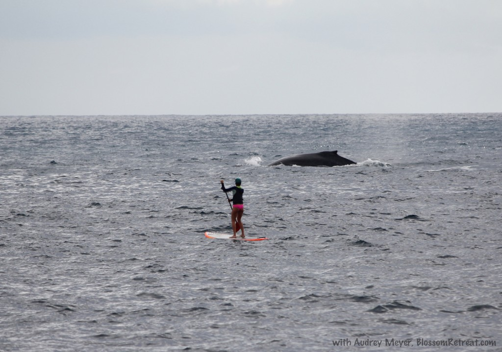 whales SUP Audrey meyer blossom